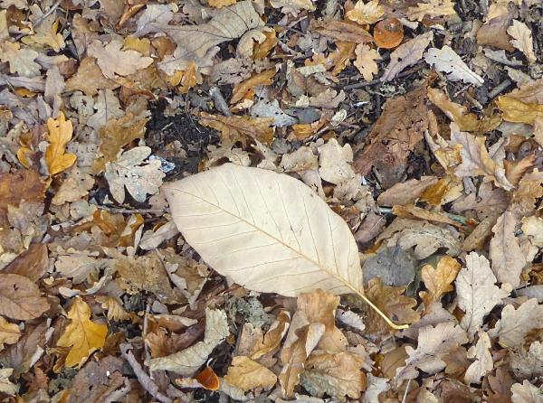 40-bpark-cucumber-leaf