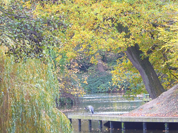 40-bpark-heron-in-autumn