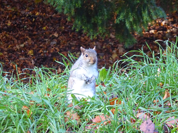 40-bpark-squirrel