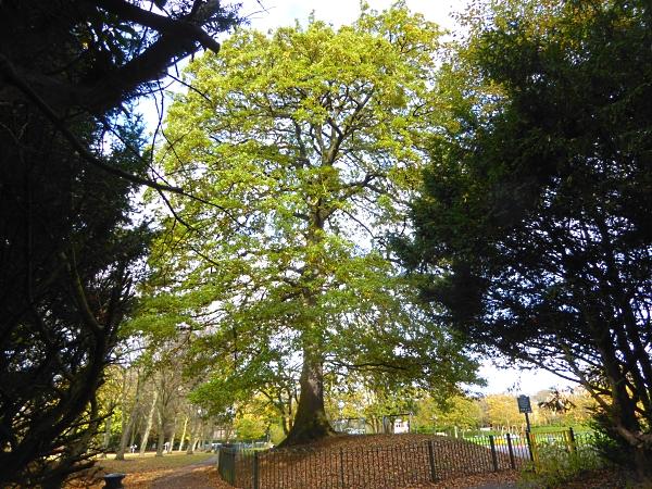 40-bpark-turkey-oak