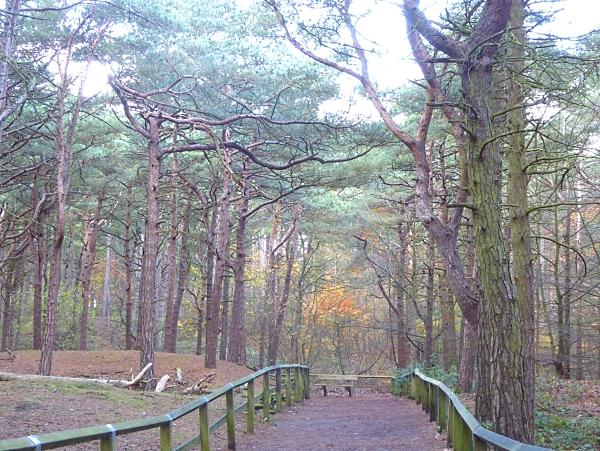 41-freshfield-pinewood-path