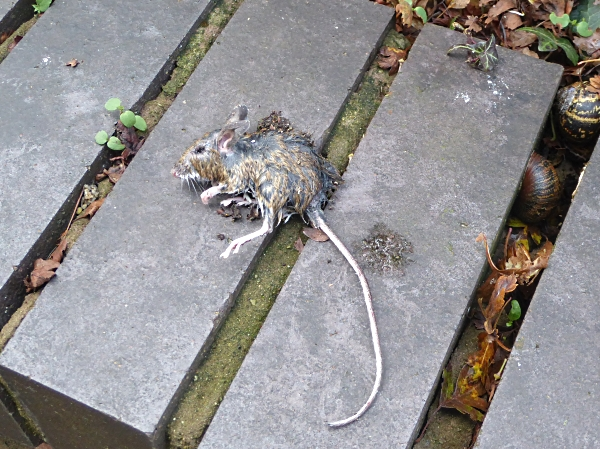 42-wway-mouse-corpse