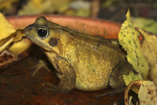 mna-magical-frog