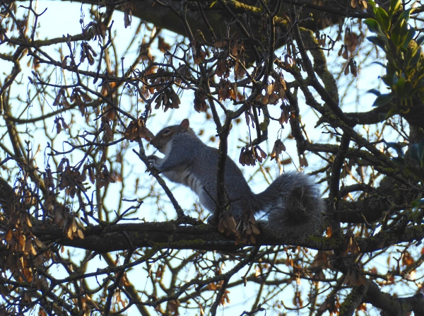 43-chester-feding-squirrel