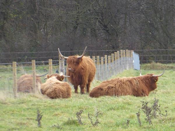 44-croxteth-highland